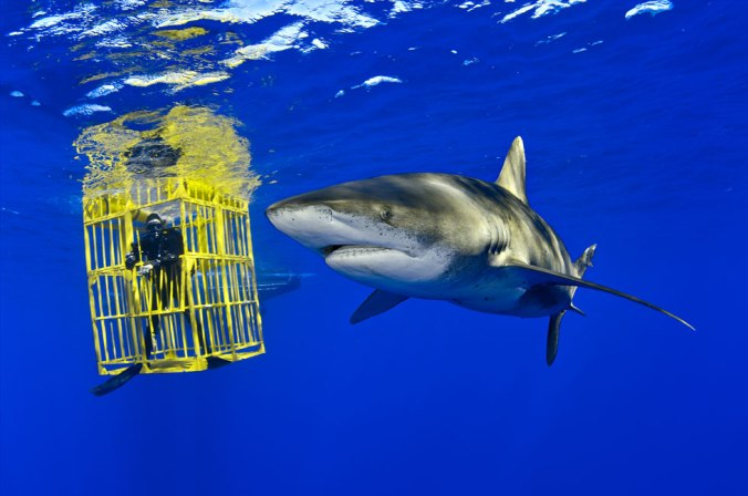 brian-skerry-oceanic-whitetip-shark-02