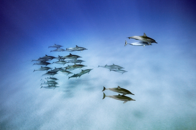 dolphins-cr-brian-skerry-1
