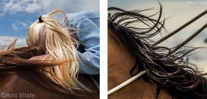 horse mane collage